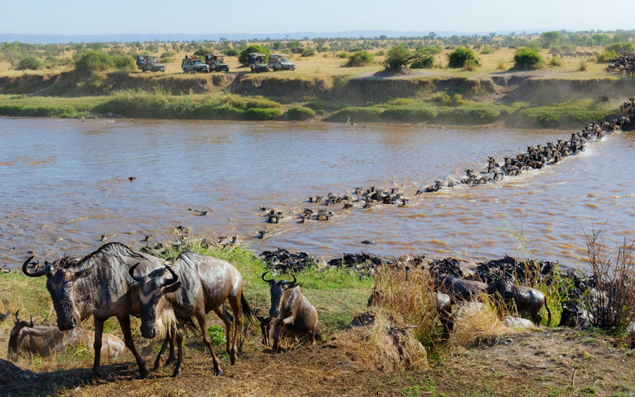 The Serengeti: The highway for two and half million animals